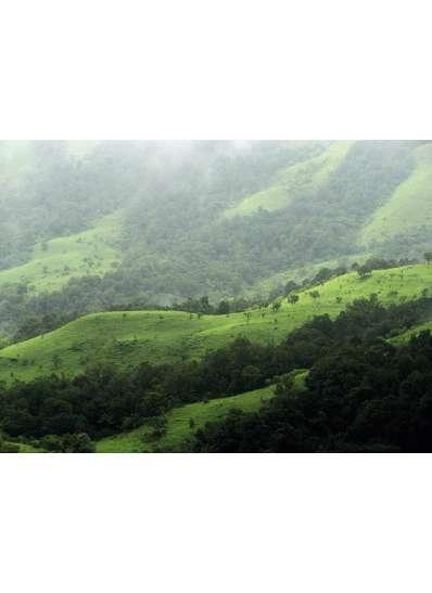 LUOGO | India Plantation Chikmagalur